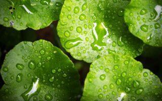 Wassertropfen auf Blättern